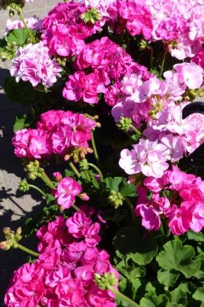 G & R Gardens 8
