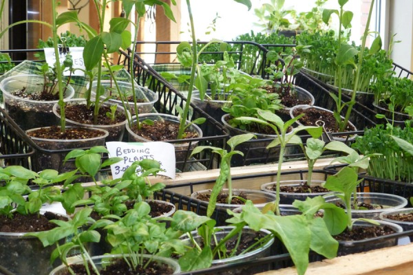 Wally's Urban Market Garden